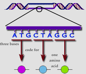 DNA Code Construction | electronics hobby
